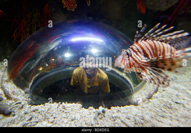 Sea Life Centre Aquarium In Stock Photos & Sea Life Centre Aquarium In ...