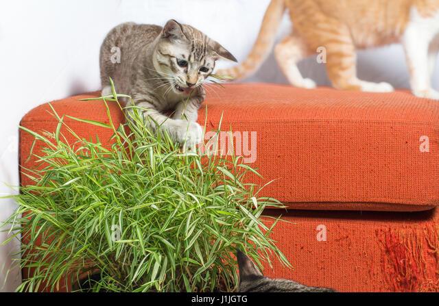 kitten can t meow
