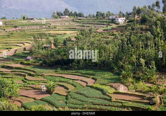 Terrace farming stock photos terrace farming stock for Terrace 6 indore images