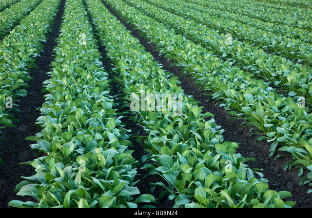 What kind of crops are grown in Asia?