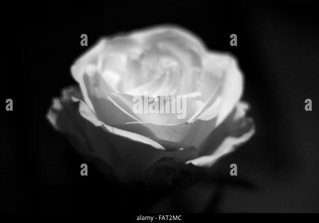 Weisse Blumen Stock Photos & Weisse Blumen Stock Images - Alamy