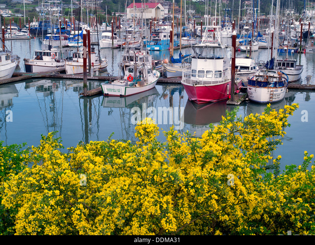 Lingcod and Rockfish Charters | Brookings Fishing