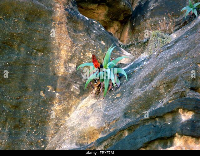 middle eastern single men in blooming prairie 15102015 zedd, grey - the middle (lyrics) ft maren morris - duration: 3:05 syrebralvibes 80,063,013 views 3:05 dj snake, lauv - a different way .