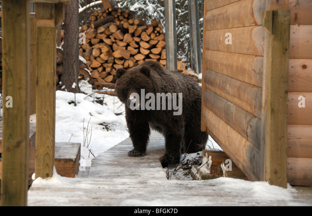 Snow covered log cabin stock photos snow covered log for Snow bear ice fishing