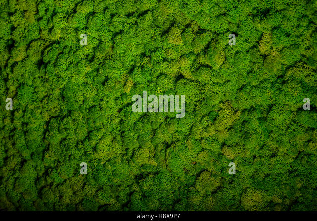 moss wall interior stock photos moss wall interior stock images alamy. Black Bedroom Furniture Sets. Home Design Ideas