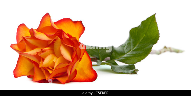 Rose Marie Stock Photos Amp Rose Marie Stock Images Alamy