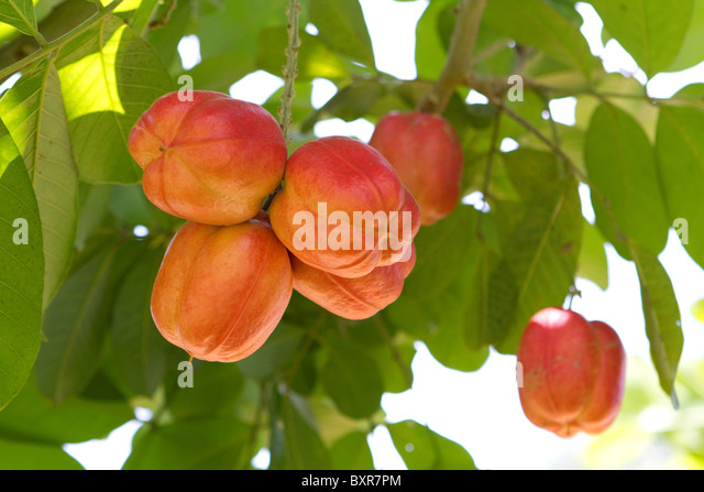 Ackee Fruit Stock Photos & Ackee Fruit Stock Images - Alamy