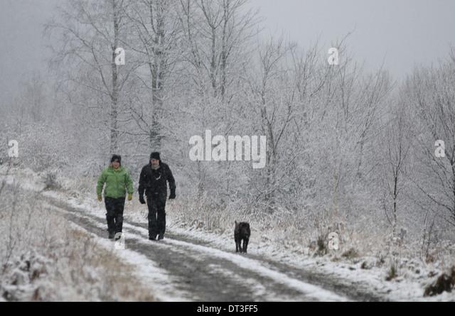 Menstrie Dog Walking