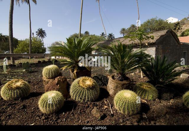 Cidade stock photos cidade stock images alamy for Cactus santiago