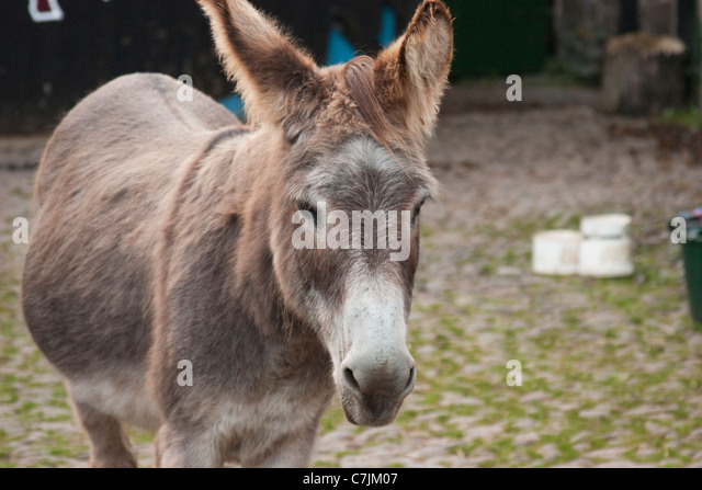 Mule Mare With Stock Photos & Mule Mare With Stock Images - Alamy