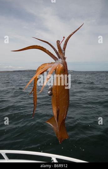 squid fishing stock photos & squid fishing stock images - alamy, Reel Combo