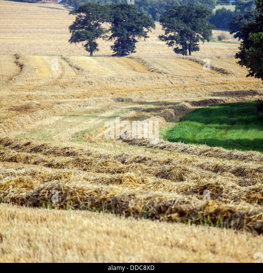 how to cut hay field