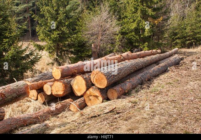Timber harvesting stock photos timber harvesting stock for Pine tree timber