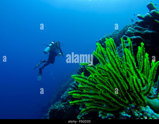 green corals stock photos & green corals stock images - alamy, Reel Combo