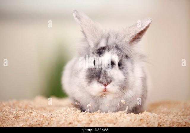 how to litter train a dwarf rabbit