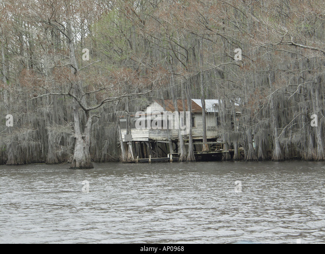 Cypress trees in caddo lake stock photos cypress trees for Fishing cabins in louisiana