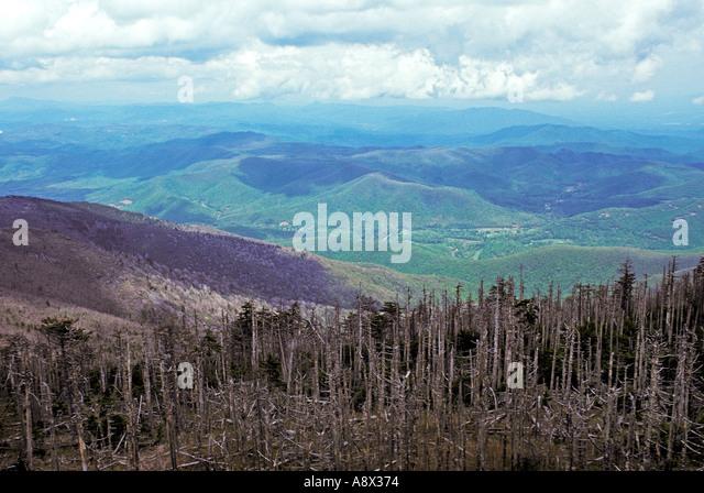 Acid Rain Damage Stock Photos & Acid Rain Damage Stock Images - Alamy