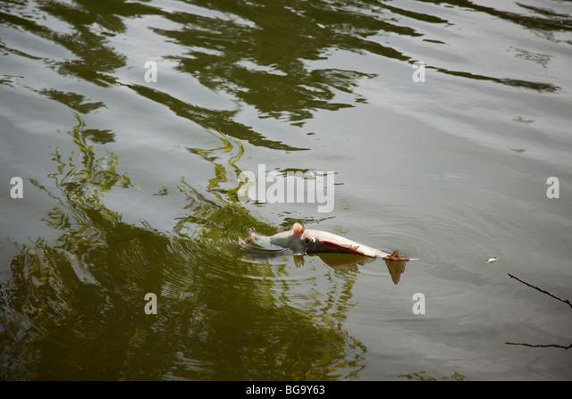 Catfish stock photos catfish stock images alamy for Lake temescal fishing