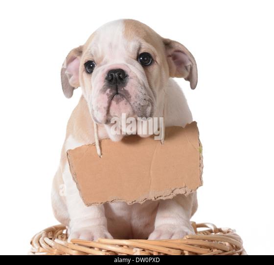 Adoption Centre For Dogs Near Me