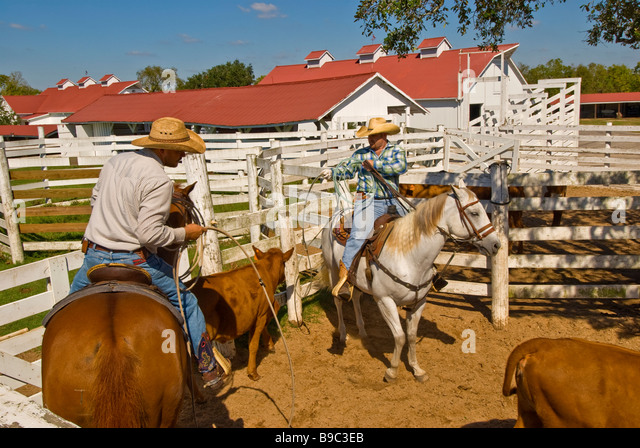 Cattle ranch texas stock photos cattle ranch texas stock images alamy - Ranch americain poet interiors houston ...