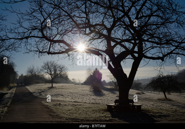 """a bright winter morning """"when people are exposed to sunlight or very bright artificial light in the morning,  their nocturnal melatonin production occurs sooner, and they."""