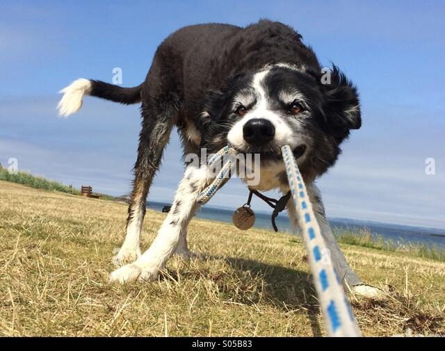 a-dog-pulling-on-a-rope-s05b83.jpg