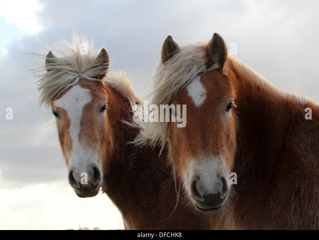 long manes stock photos - photo #4
