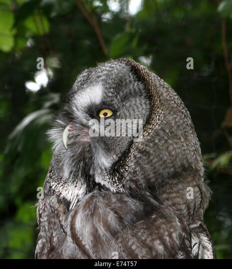 Sooty Face Stock Photos Amp Sooty Face Stock Images Alamy