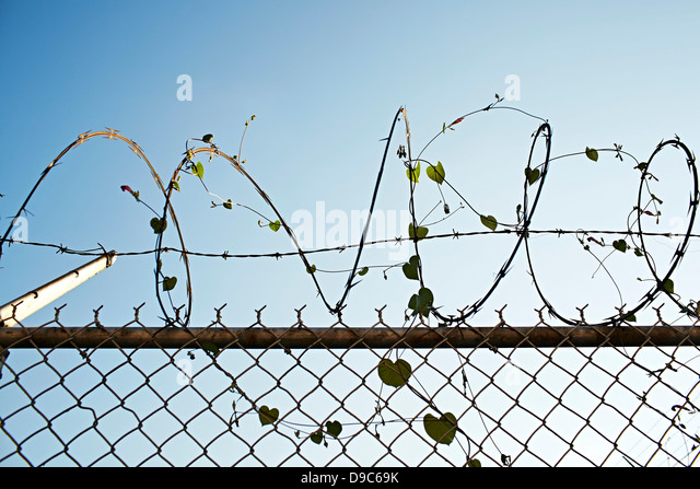 Ivy Barbed Wire Stock Photos & Ivy Barbed Wire Stock Images - Alamy