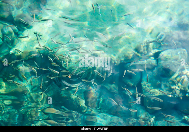Fish bait stock photos fish bait stock images alamy for Piece of fish
