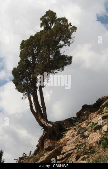 Alay Stock Photos & Alay Stock Images - Alamy