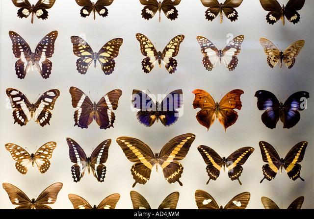 Butterflies collection stock photos butterflies - Butterfly world com table tennis ...