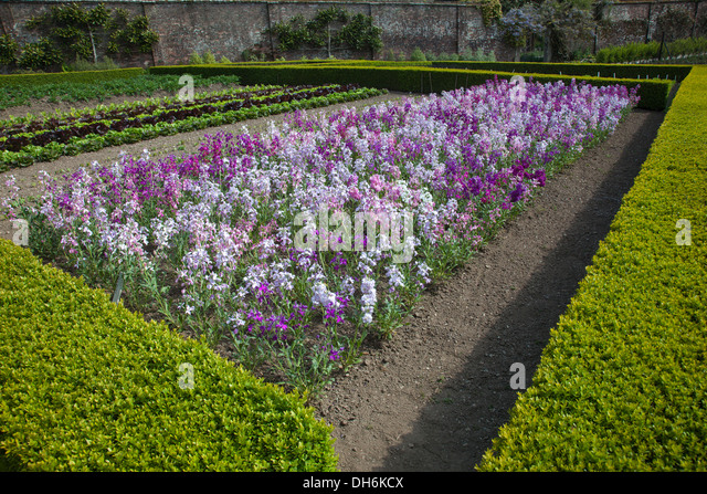 the herb gardens in the lost gardens of heligan stock image