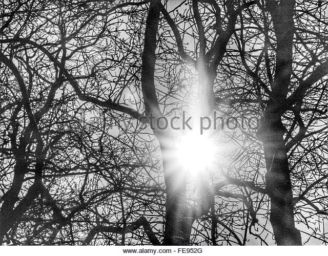 sunlight through trees black - photo #11