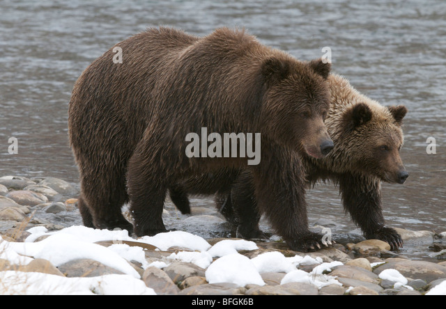 Two animals and snow stock photos two animals and snow for Snow bear ice fishing