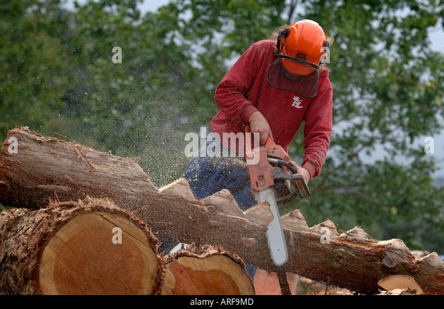 Chainsaw wood carving pixshark images