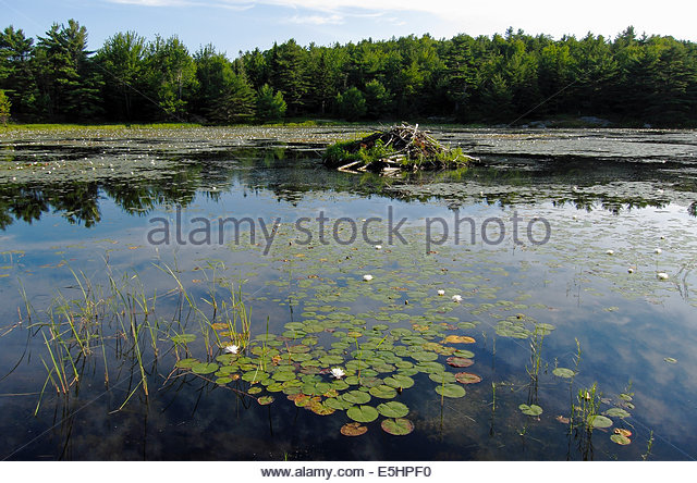 Eagle pond stock photos eagle pond stock images alamy for Stocked fishing ponds near me