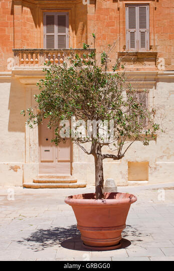 olive tree pot stock photos olive tree pot stock images. Black Bedroom Furniture Sets. Home Design Ideas
