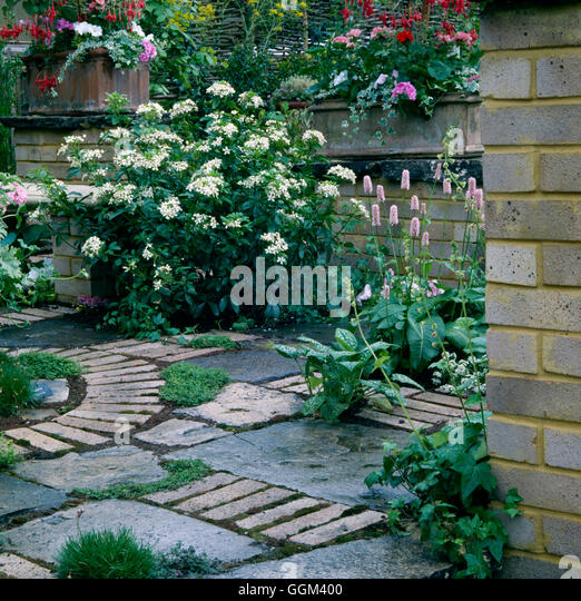 Paving And Plants   Patio With Plants Placed In Spaces Between Paving  PPL019912 Photos Horticu