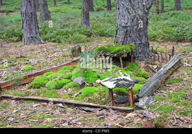 Miniature Tree House model miniature tree house stock photos & model miniature tree