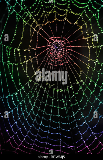Black Spiders Stock Photos Black Spiders Stock Images Alamy