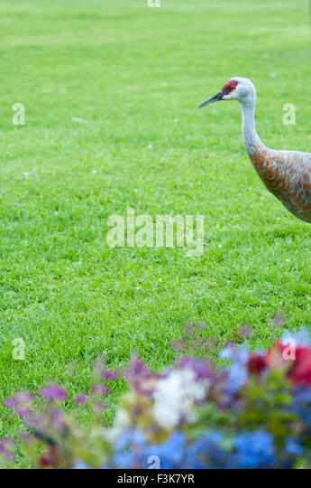 Crane Flowers Stock Photos Amp Crane Flowers Stock Images