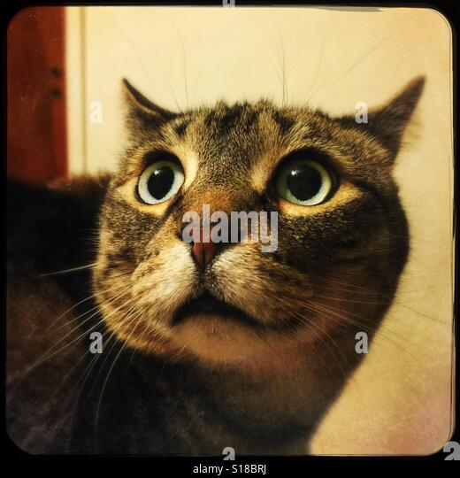 Nervous Looking Tabby Cat Stock Photos Amp Nervous Looking