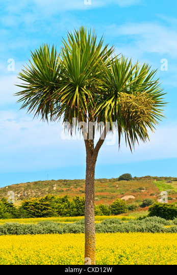 Single palm tree pictures - message non friend facebook images