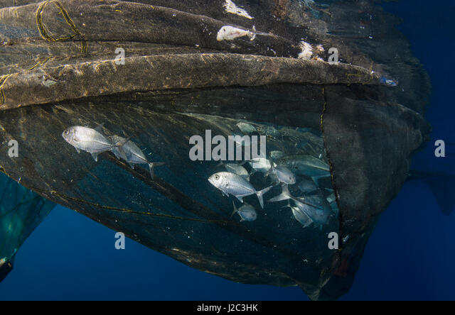 Shark attract stock photos shark attract stock images for Floating fishing platform