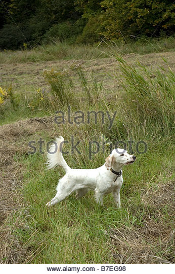 Who Is The Best Hunting Dog Trainer In Lake Charles