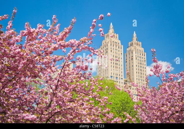 park spring blossom - photo #6