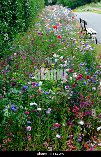 Wildflower Wildflowers Bed Bedding Display Border Borders Annual Annuals Garden  Gardening Design Mix Mixed Combination