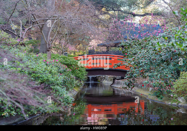 Japanese Garden Cherry Blossom Bridge japanese cherry blossom california stock photos & japanese cherry