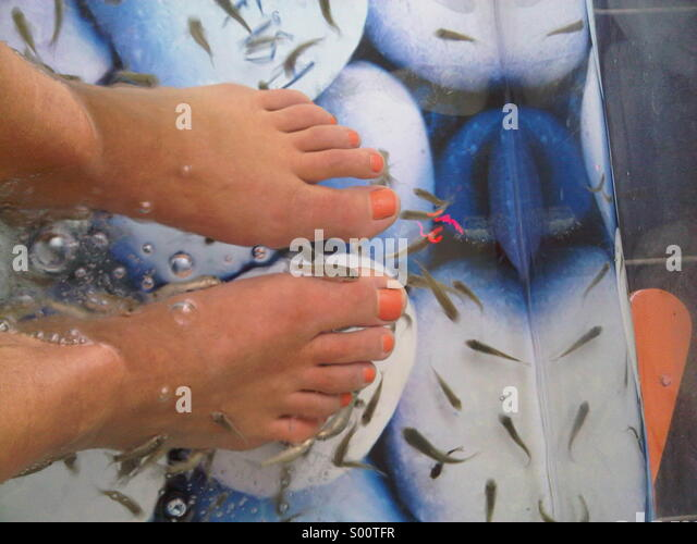 fish pedicure stock photos fish pedicure stock images